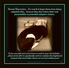 #animals #adopt #rescue #dogs #cats #puppies #kittens #care #foster #homes #cruelty #animalabuse #awareness #pets #save