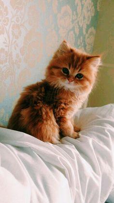 Cute ,adorable