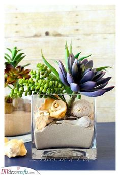 Coastal Inspired Succulent Garden - beach sand, shells, rock, succulents DIY Garden Yard Art When gr Succulent Wall, Succulent Gardening, Succulent Terrarium, Planting Succulents, Planting Flowers, Indoor Gardening, Shell Centerpieces, Sunroom Decorating, Summer Decorating