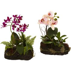 Evoke the lush beauty of the tropics on your dining table or library desk with this pair of majestic orchids, perfect paired with bright vases and accents fo...