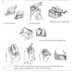 how to trim sheep hooves: prevent foot rot