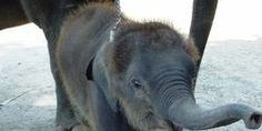 Stop Sales of Baby Elephants Globally