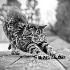 gatos fofos - Pesquisa do Google