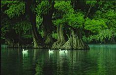 EN EL LAGO - in the lagoon??