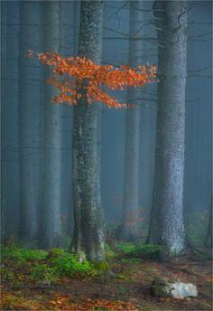 Carpathian Forest … by Alexander Kitsenko