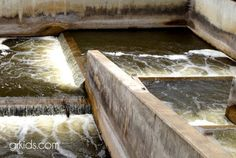 Fish Ladder in downtown Grand Rapids, MI    So cool watching the fish climb the ladder :)