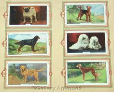 Dogs 2nd series Full Set of 48 Original by GalleryAntiques on Etsy