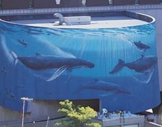 """The famous """"Whale Wall"""" in downtown Milwaukee. no longer around : ( Went down with the courthouse parking structure. I do like the fact that you can now see the courthouse from the freeway though : ) Milwaukee City, Milwaukee Wisconsin, Lake Michigan, Wyland Art, Great Lakes, Places To See, The Good Place, Whale, Street Art"""