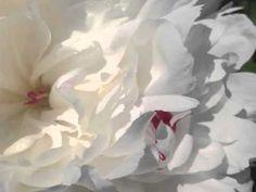 I am Here to Flourish - a 90 second #meditation! www.meditationsimple.com