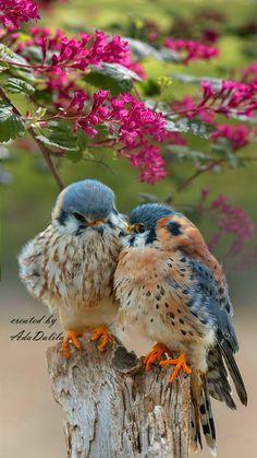 Pretty Birds, Love Birds, Beautiful Birds, Animals Beautiful, Exotic Birds, Colorful Birds, Owl Bird, Bird Art, Cute Creatures
