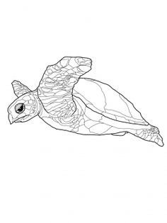 Hawksbill Sea Turtle Coloring Page. Hawksbill Sea Turtle Coloring Page. Green Sea Turtle Coloring Page Pages Clip Art Library Turtle Coloring Pages, Animal Coloring Pages, Coloring Pages For Kids, Coloring Books, Coloring Stuff, Crayons Pastel, Clip Art Library, Paper Embroidery, Embroidery Patterns