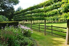 Nick McCullough explains how espaliers can work in almost any garden type: big and small, formal and informal, grand and modest. www.gardendesign.com