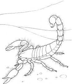 Scorpion  coloring pages @Jodi Chang Ogle