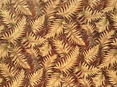 Fabric Material  Fall Ferns  Great for Crafts by CraftingFabric, $2.90