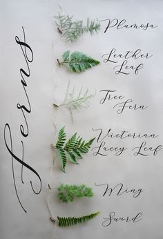 FiftyFlowers has serveral different varieties of Fern! Ferns are a fun greenery that add a soft texture, and serves as a wonderful decorative filler. Container Gardening Vegetables, Succulents In Containers, Container Flowers, Container Plants, Vegetable Gardening, Thistle Tattoo, Fern Tattoo, Floral Wedding, Wedding Flowers
