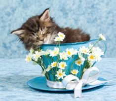 """Read my blog post """"Why Change Isn't Like A Kitten In A Cup"""" at: http://www.wednesdayteatime.co.uk/why-change-isnt-like-a-kitten-in-a-cup/"""