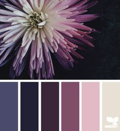 Floral Hues, Crysanthemum palette from Design Seeds | Image by Georgie St Clair