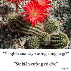 Flower Meanings, What Is Love, Cactus Plants, Cute Kids, Bloom, Hana, Hobbies, Deep, Quotes