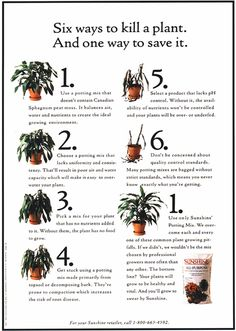Peat Moss, The Selection, Plants, Flora, Plant