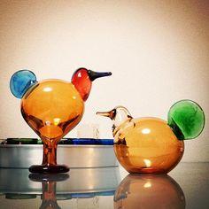 I love their colour! Brownish orange is so lovely! タンカー2、ガンガン使おうと思って購入したけど、美しすぎてkiviのおうちに(笑)  #birdsbytoikka #oiva #oivatoikka #iittala #scope_japan #スコープ #tanker2 #タンカー2 #kivi #suloandsorja #sulo #sorja #セビリアオレンジ #スロ #ソルヤ #スロとソルヤ Photo And Video, Glass, Bird, Instagram, Photos, Pictures, Drinkware, Corning Glass, Birds