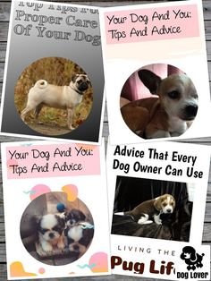 Take Control Of Caring For Dogs Right now #petdogs Dog Care Tips, Pet Care, Pet Dogs, Dogs And Puppies, Dog Training Tips, Dog Owners, Pugs, Dog Food Recipes, Your Dog