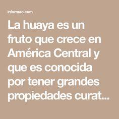La huaya es un fruto que crece en América Central y que es conocida por tener grandes propiedades curativas. Es posible que la conozcas por uno de sus muchos nombres: maco, guaya, guaym,quenepa, papamundo, limoncillo.\r\n\r\n[ad]\r\nSi la conoces, no dejes de consumirla para recibir los siguientes beneficios:\r\n\r\n\r\n\r\n- Activa el sistemainmunológico evitando la propagación de virus y bacterias.\r\n- Sus ácidos ayudan en el proceso de gestación y sus proteínas aumentan las defensas de… Central America