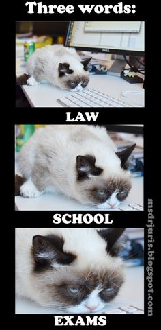 Law school exams.