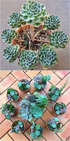 Gorgeous Succulent Container plants - Home Decor wedding Terrarium succulentes Growing Succulents, Succulents In Containers, Cacti And Succulents, Container Plants, Planting Succulents, Cactus Plants, Container Gardening, Garden Plants, House Plants