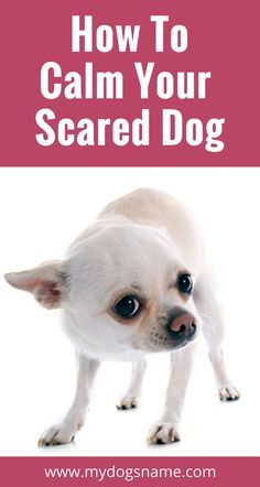 Does your dog get anxious and freaked out? Read on for tips on how to calm your scared dog. Your dog will be relaxed and happy in no time! and xenoblade x blossom, disney pets and mishkan hanefesh pdf. Dog Training Classes, Training Your Puppy, Dog Training Tips, Safety Training, Training Schedule, Brain Training, Training Center, Potty Training, Xenoblade X