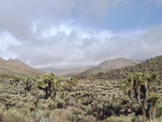 Mojave Desert meets the Sierra Nevada. Walker Pass Ca. [3264 x 2448]
