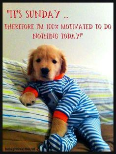 Golden Retriever puppy in pajamas.