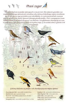 TE-13 - Vogeluhr Animals And Pets, Cute Animals, Polish Language, Nature Journal, Science Art, Kids Education, Travel With Kids, Teaching Kids, Bird Feeders