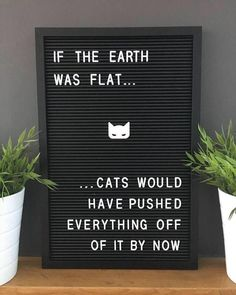 New Cats Quotes Letterboard Ideas I Love Cats, Cute Cats, Funny Cats, Funny Animals, Grumpy Cats, Humour Wtf, Crazy Cat Lady, Crazy Cats, Funny Signs