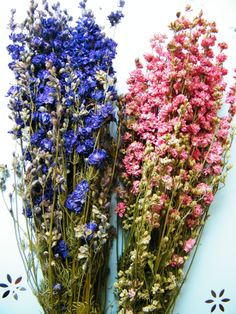 Big bunches of delphiniums in blue or pink from daisyshop.co.uk