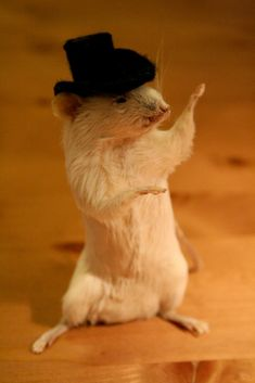 All at once, the mouse in the top hat began gesticulating wildly.
