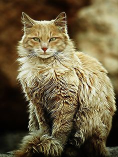 """""""The only mystery about the cat is why it ever decided to become a domestic animal."""" --Sir Compton Mackenzie"""