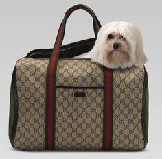 Gucci dog carrier #Maltese