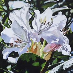 Buy Summer Light, Acrylic painting by Joseph Lynch on Artfinder. Discover thousands of other original paintings, prints, sculptures and photography from independent artists. Paintings For Sale, Original Paintings, Flower Art, Art Flowers, Wild Flowers, Short Trip, Natural Forms, Acrylic Painting Canvas, Botanical Art