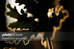 Fotografía de editorial: conceptos #naturaleza #nature #geraniolimon #geranio #fotografia #stock #bancosdeimagen #editorial #stockphotography #photography