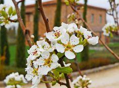 Dai un'occhiata a questo fantastico annuncio su Airbnb: LA FIORITA FARMHOUSE,Ortensia 4+2 - Appartamenti in affitto a Cortona