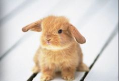 Really cute pictures of baby animals. Really cute pictures of baby animals. Baby Animals Pictures, Cute Baby Animals, Funny Animals, Animal Babies, Wild Animals, Vegan Animals, Animal Pics, So Cute Baby, Cute Babies