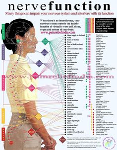 Nervous System Function... Plan and simple.. is what it all comes down too!