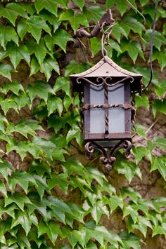 ornate lantern on ivy covered wall | outdoor lighting