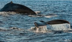 Humpback Adventure, Maui | Hawaii Pictures of the Day