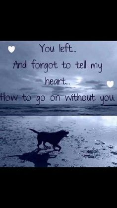 Losing A Dog Quotes Grief Rainbow Bridge Pet Loss Someone Special Quotes, Missing Someone Quotes, Dog Death Quotes, Pet Loss Quotes, Dog Quotes Sad, Death Quotes Grieving, Dog Heaven Quotes, Baby Quotes, I Love Dogs