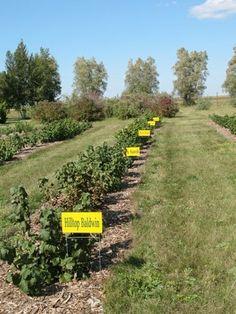 NDSU - Northern hardy fruit orchard plant ideas.