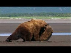 """Grizzly Man - 14. """"Bear Fight"""" - YouTube"""