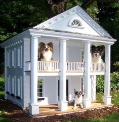 For protection & security getting Outdoor Dog Kennels is accurate option you can choose. Best Outdoor dog kennels will protect your dog from several outdoor Cool Dog Houses, Play Houses, Dog Mansion, Canis, Dog Rooms, Pet Furniture, Pet Home, Outdoor Dog, Animal House