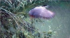 Kuşların peşinde foto safari