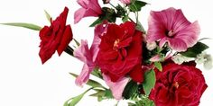 Latest Images Of Flowers Wallpaper Free Download